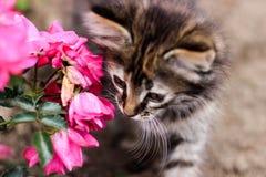 Kleine Miezekatze, Kätzchen und rosa Blume Stockfotografie