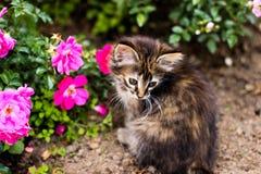 Kleine Miezekatze, Kätzchen und rosa Blume Stockfoto