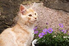 Kleine Miezekatze und Blumen Lizenzfreie Stockfotografie