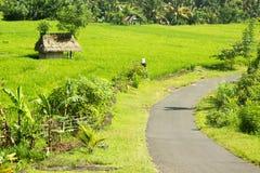 Kleine mit Stroh gedeckte Hütten auf dem Reisgebiet und der Straße stockbild