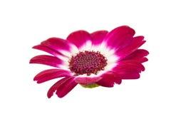 Kleine mooie bloemen Royalty-vrije Stock Afbeelding