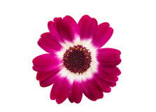 Kleine mooie bloemen Stock Afbeelding
