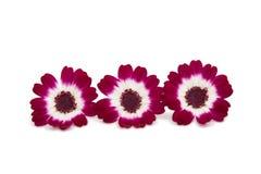 Kleine mooie bloemen Stock Fotografie