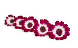 Kleine mooie bloemen Stock Afbeeldingen