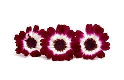 Kleine mooie bloemen Royalty-vrije Stock Foto's