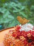Kleine mooie vlinder in het Mooie Miniatuurpark van Indonesië Royalty-vrije Stock Afbeeldingen