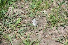 Kleine Motten Stockbild