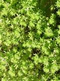 Kleine nauwelijks zichtbare bloemen Stock Foto's