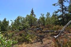 Kleine nette bomen en wortels stock foto