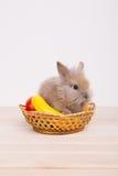 Kleine nette dekorative Kaninchen Lizenzfreies Stockfoto