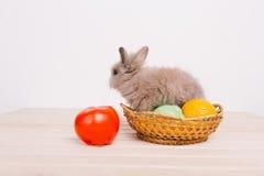 Kleine nette dekorative Kaninchen Stockfotos