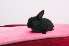 Kleine nette dekorative Kaninchen Stockbild