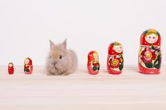 Kleine nette dekorative Kaninchen Stockbilder