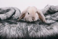 Kleine nette dekorative Kaninchen Lizenzfreies Stockbild