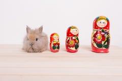 Kleine nette dekorative Kaninchen Lizenzfreie Stockfotografie