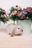 Kleine nette dekorative Kaninchen Stockfoto