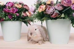 Kleine nette dekorative Kaninchen Lizenzfreie Stockbilder