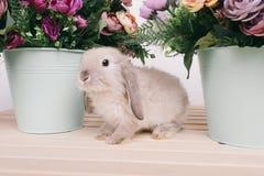 Kleine nette dekorative Kaninchen Lizenzfreie Stockfotos