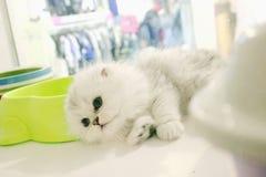 Kleine nette Katze Stockfoto