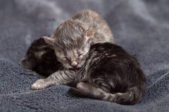 Kleine neugeborene Kätzchenlüge auf einer Decke Lizenzfreie Stockfotografie
