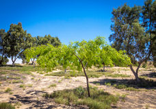 Kleine oase in de Negev-woestijn, Israël royalty-vrije stock fotografie