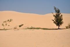 Kleine oase in de woestijn stock foto's