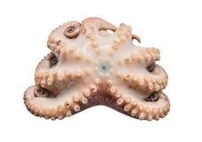 Kleine octopus Stock Afbeeldingen