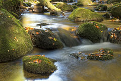 Kleine Ohe. In the Bavarian Forest royalty free stock image