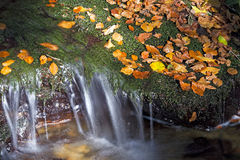 Kleine Ohe. In the Bavarian Forest royalty free stock photo