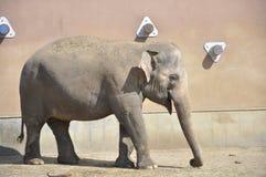 Kleine olifant Stock Fotografie