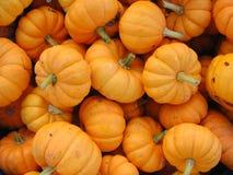 Kleine, orange Kürbise gruppiert für Verkauf stockbild