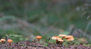 Kleine orange Pilze Lizenzfreies Stockfoto