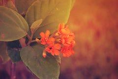 Kleine Oranje bloem in de tuin DOUBAI, de V.A.E op 26 JUNI 2017 royalty-vrije stock afbeelding