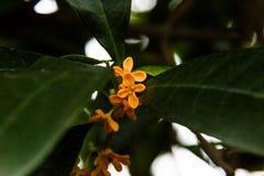 Kleine oranje bloemen op een boom stock foto's