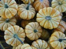 Kleine oranje en witte gespikkelde pompoenen stock foto's