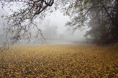Kleine Ostlaube an einem nebeligen Morgen im Herbst lizenzfreies stockfoto