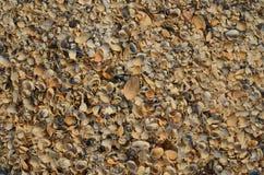 Kleine overzeese shells Stock Fotografie