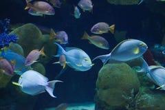 Kleine Ozeanfische Lizenzfreies Stockfoto