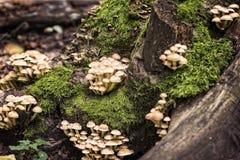 Kleine paddestoelen in een bos Royalty-vrije Stock Afbeeldingen