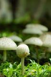 Kleine paddestoelen in het bos Royalty-vrije Stock Fotografie