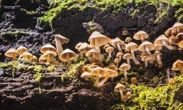 Kleine paddestoelen in regenwoud. Stock Afbeelding