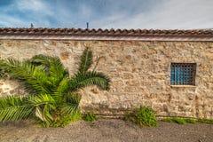 Kleine palm en rustieke muur in Sardinige royalty-vrije stock afbeelding
