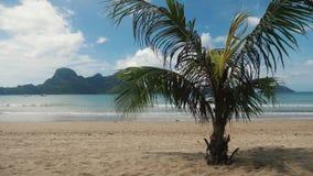 Kleine palm op een mooi tropisch strand in Filippijnen stock videobeelden
