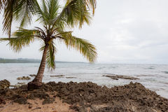 Kleine palm in rotsachtig strand Royalty-vrije Stock Foto's