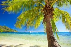 Kleine Palme, die über blauer Lagune hängt Lizenzfreie Stockfotografie