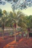 Kleine palmen in de tuin Royalty-vrije Stock Foto
