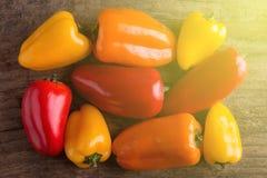 Kleine peper - zonlicht Royalty-vrije Stock Fotografie