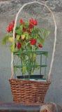 Kleine Pfeffer mögen Blumen Stockbilder