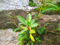 kleine Pflanzen lizenzfreie stockfotos