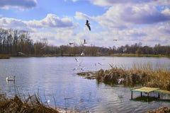 Kleine pijler op het meer, in de achtergrondzwanen Stock Foto